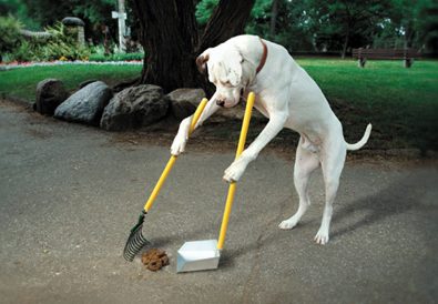 doggie-pooper-scooper.jpg